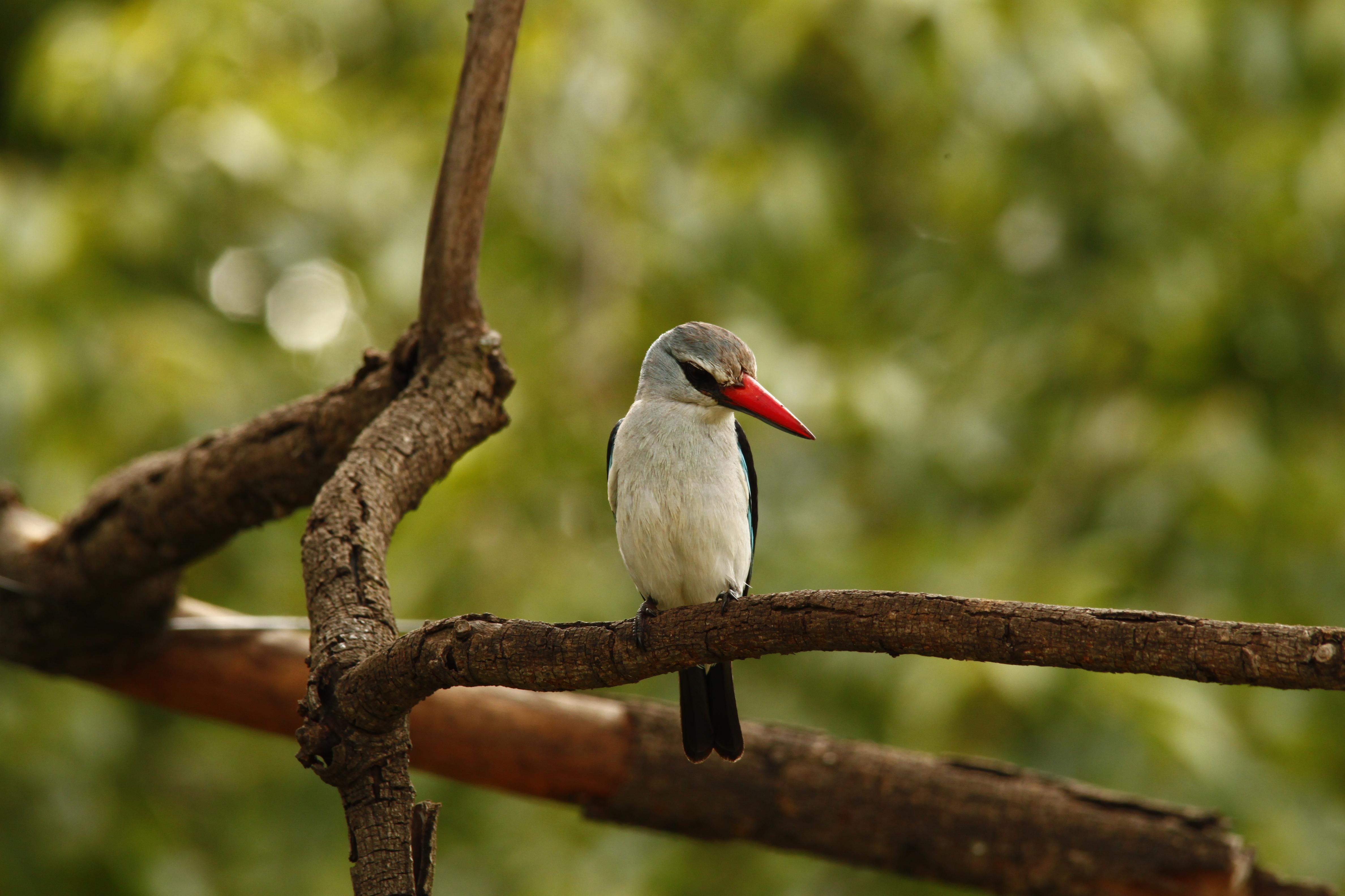 Garden Birds Of South Africa Photos Garden Ftempo